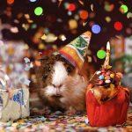 День рождения – лучший праздник