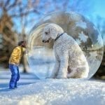 Огромная собака – фото