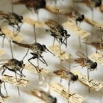 Лучшее средство от комаров