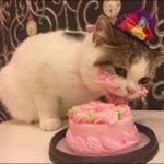Тортик на день рождения кота