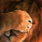 Хит-парад заблуждений о животных