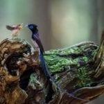 Трогательные фотографии птиц, заботящихся о своих птенцах