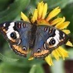 Интересные снимки с насекомыми